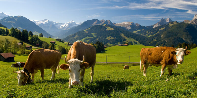 Berner Oberland Camping Schweiz