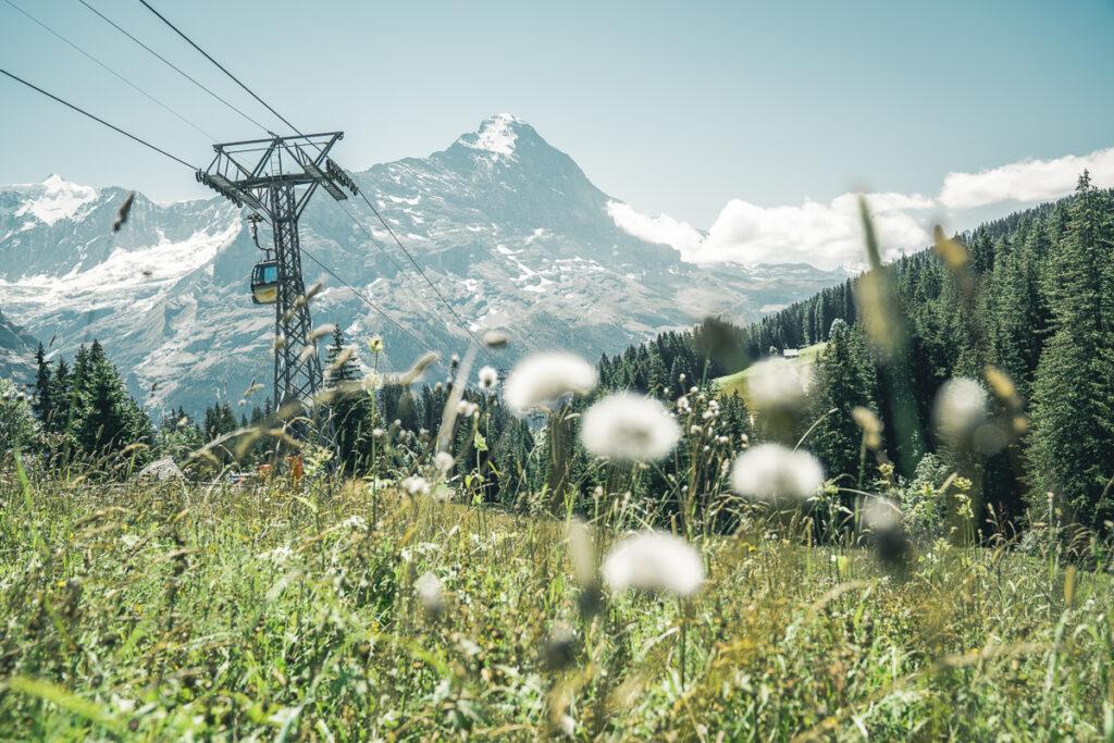 Grindelwald First Cliff Walk Bort